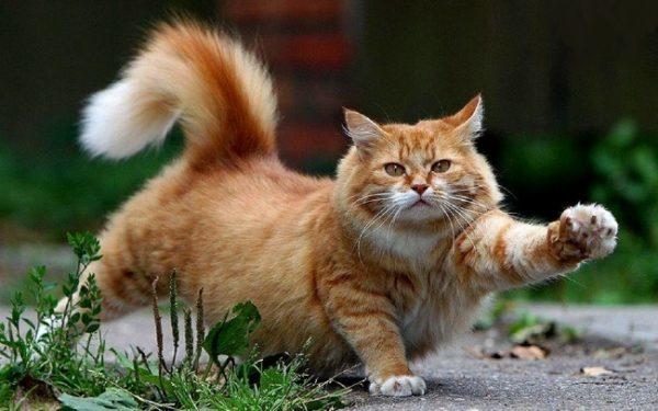 Как трусливый кот на крыс охотился! Дачная байка!