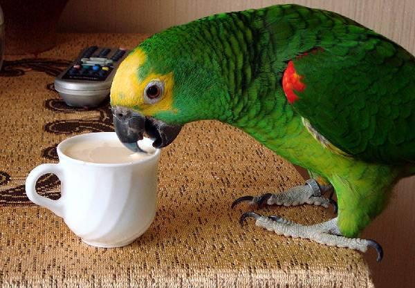 «Продам попугая!» — это реальное объявление с Авито, рассмешило весь интернет!