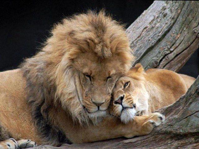 Парень и девушка пошли в зоопарк