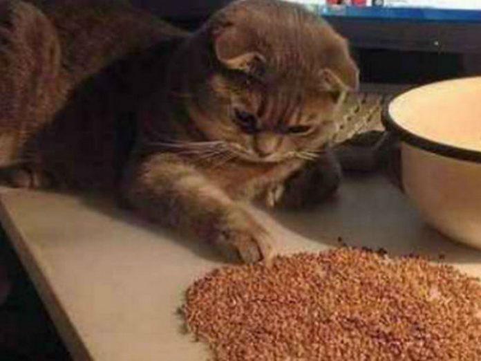Мужик решил начать экономить, но его кот понял это не сразу…