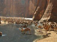 Однажды путешественник заблудился в пустыне и отчаялся когда-либо найти воду
