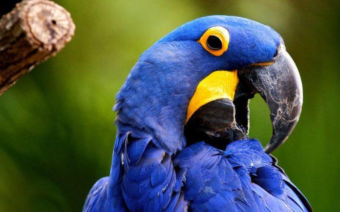 Женщина отправилась в зоомагазин и сразу же заметила крупного красивого попугая
