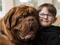 Родители заметили, что пес всегда находится справа от мальчика. Оказалось, он кое-что знал
