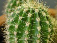 Парень просто набрал земли для кактуса, не зная, что произойдет такое…