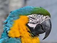 Случай про попугая