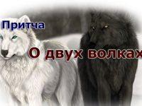 Притча о добре и зле. Какой волк победит?
