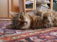 Сестра приставала и тискала кота