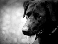 Как спасение собаки помогло мне обрести семейное счастье