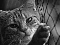 Как меня кот от большой собаки спас
