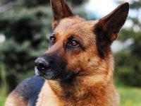 Как собака спасла мою жизнь от грабителей