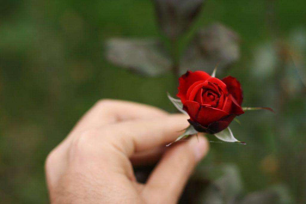 Я никогда не забуду то чувство, когда держала розу в своих руках