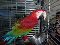 Нашли применение попугаю...