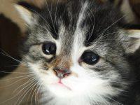 Котейка надоел, пристроить некому, выход один – усыплять