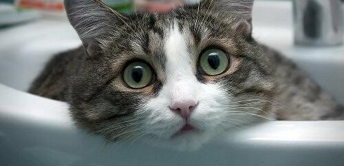 ухаживание кошек